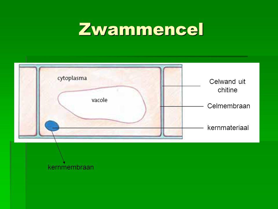 Zwammencel Celmembraan Celwand uit chitine kernmateriaal kernmembraan