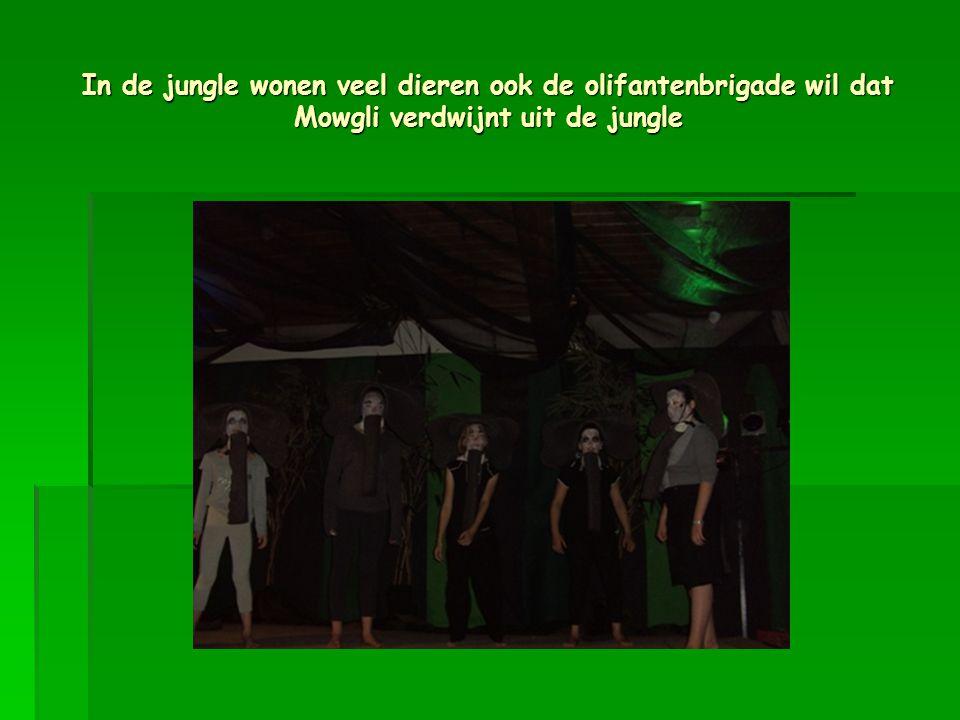 In de jungle wonen veel dieren ook de olifantenbrigade wil dat Mowgli verdwijnt uit de jungle