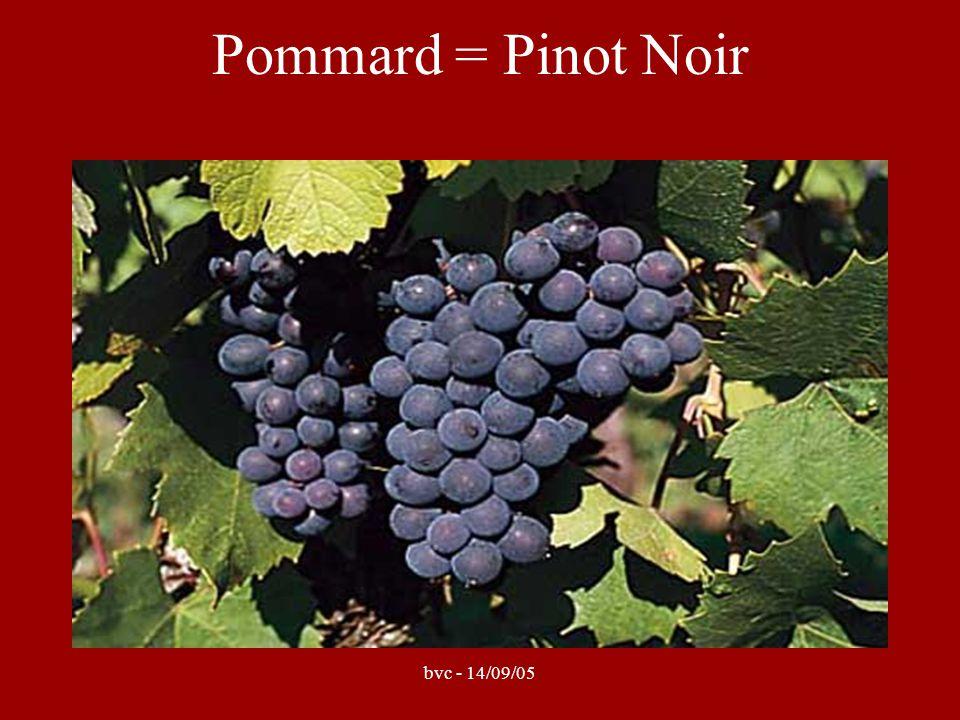 bvc - 14/09/05 Pommard = Pinot Noir