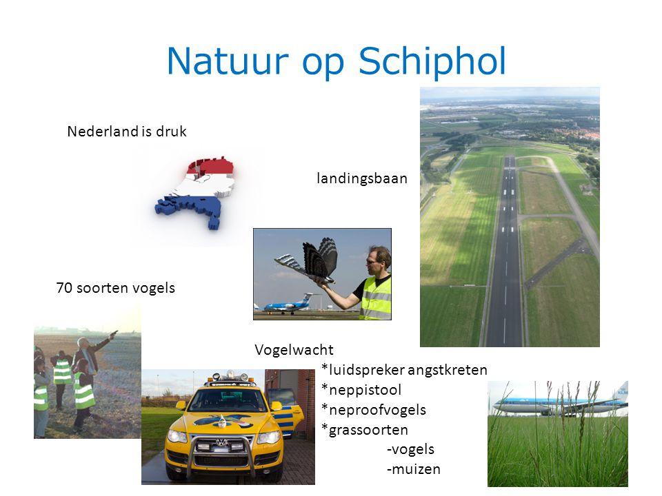 Natuur op Schiphol Nederland is druk landingsbaan 70 soorten vogels Vogelwacht *luidspreker angstkreten *neppistool *neproofvogels *grassoorten -vogels -muizen