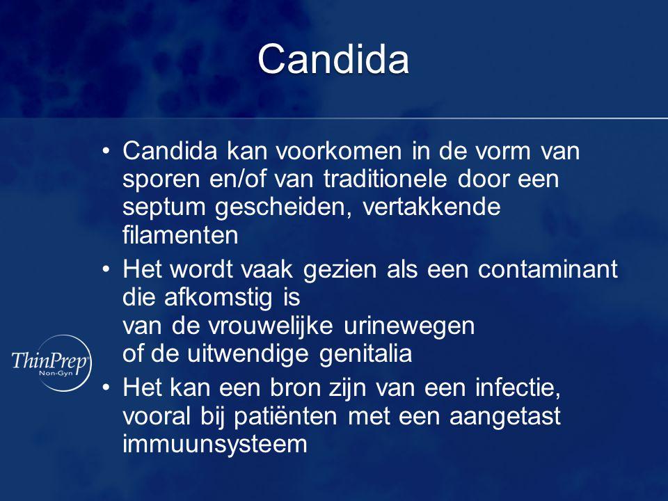 Candida Candida kan voorkomen in de vorm van sporen en/of van traditionele door een septum gescheiden, vertakkende filamenten Het wordt vaak gezien al