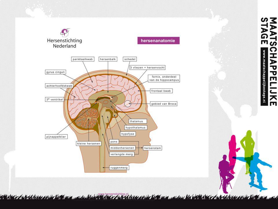 5 4 keer puberbrein Kicks/stijging spiegel diverse hormonen Heftige emoties/ Amygdala meer overhand Ratio op achterstand/ Frontale kwab in ontwikkeling Geen helikopterview/ minder verbindingen tussen de hersenen