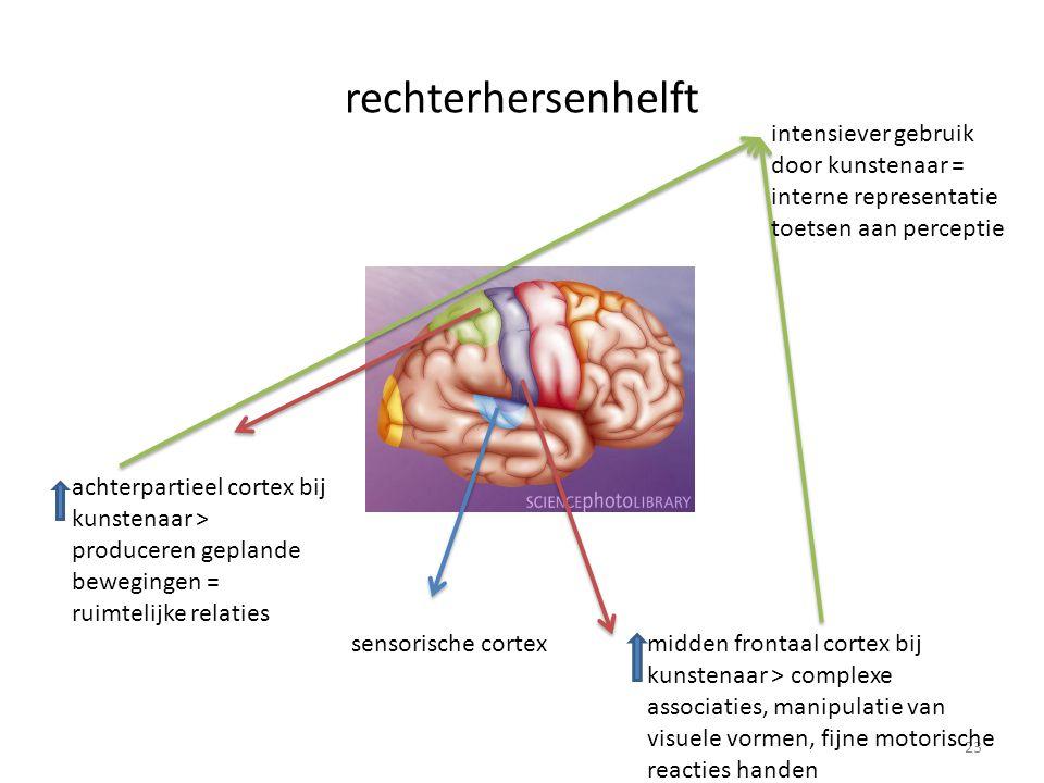 rechterhersenhelft 23 achterpartieel cortex bij kunstenaar > produceren geplande bewegingen = ruimtelijke relaties midden frontaal cortex bij kunstenaar > complexe associaties, manipulatie van visuele vormen, fijne motorische reacties handen intensiever gebruik door kunstenaar = interne representatie toetsen aan perceptie sensorische cortex