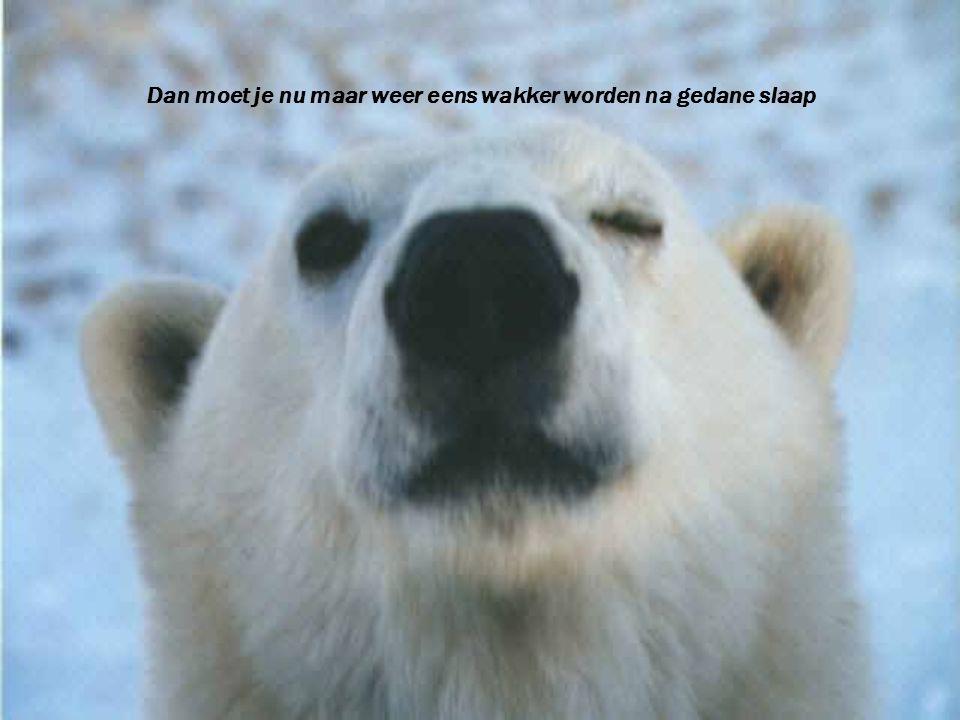 Dan moet je nu maar weer eens wakker worden na gedane slaap