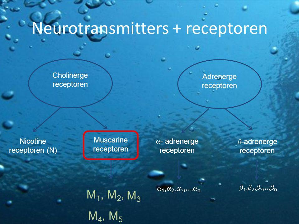 Neurotransmitters + receptoren Cholinerge receptoren Adrenerge receptoren Nicotine receptoren (N)  -adrenerge receptoren  - adrenerge receptoren Mus