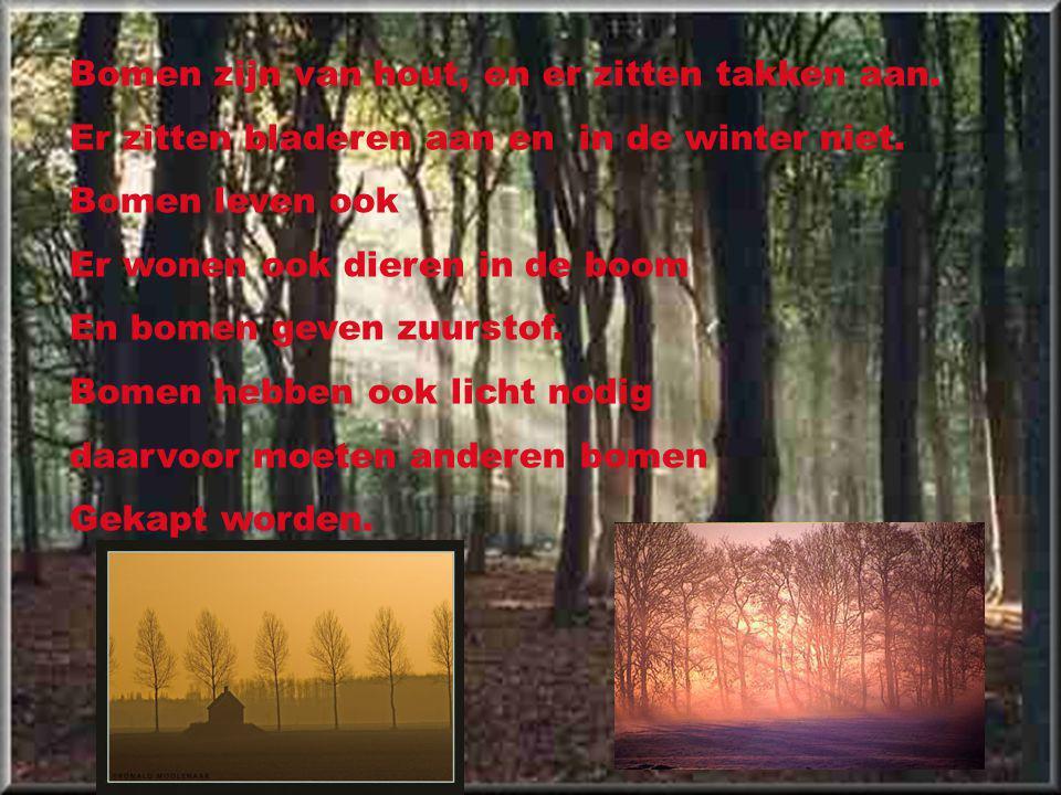 Bomen zijn van hout, en er zitten takken aan.Er zitten bladeren aan en in de winter niet.