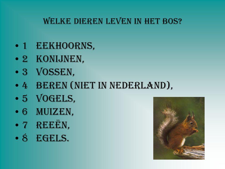 Welke dieren leven in het bos? 1Eekhoorns, 2Konijnen, 3Vossen, 4Beren (Niet in Nederland), 5Vogels, 6Muizen, 7Reeën, 8Egels.