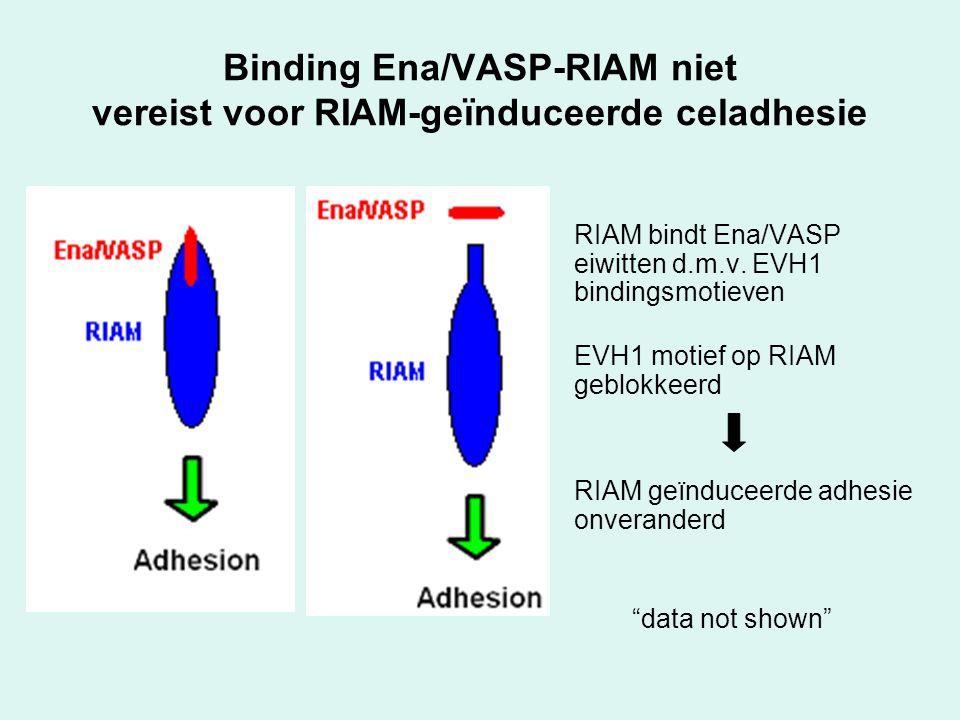 """RIAM bindt Ena/VASP eiwitten d.m.v. EVH1 bindingsmotieven EVH1 motief op RIAM geblokkeerd RIAM geïnduceerde adhesie onveranderd """"data not shown"""" Bindi"""