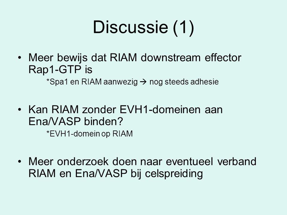 Discussie (1) Meer bewijs dat RIAM downstream effector Rap1-GTP is *Spa1 en RIAM aanwezig  nog steeds adhesie Kan RIAM zonder EVH1-domeinen aan Ena/V