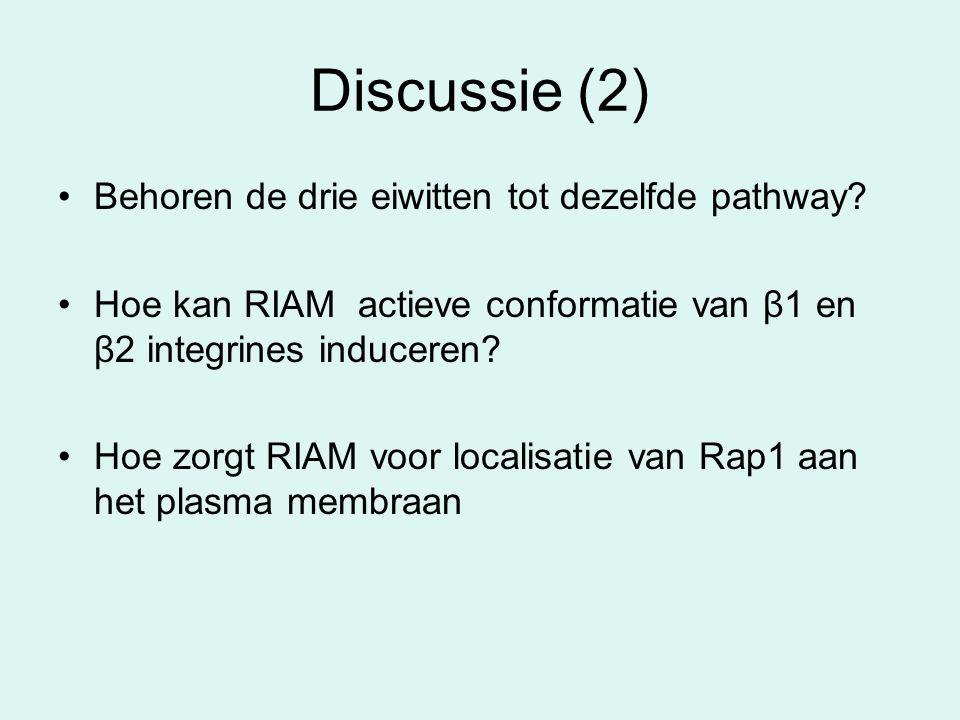Discussie (2) Behoren de drie eiwitten tot dezelfde pathway? Hoe kan RIAM actieve conformatie van β1 en β2 integrines induceren? Hoe zorgt RIAM voor l