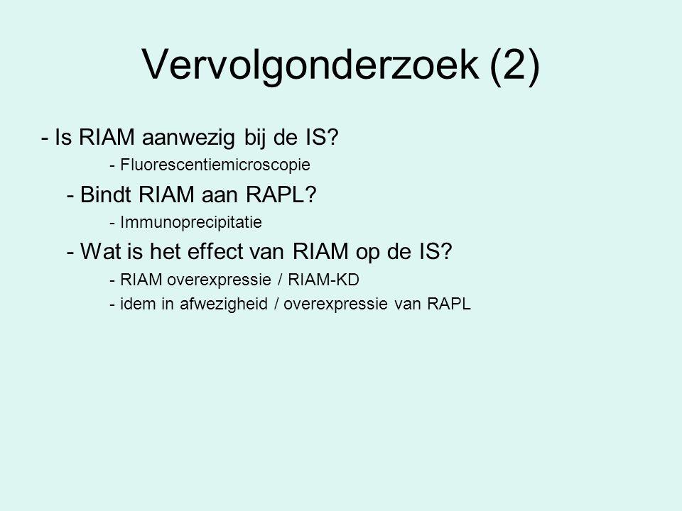 Vervolgonderzoek (2) - Is RIAM aanwezig bij de IS? - Fluorescentiemicroscopie - Bindt RIAM aan RAPL? - Immunoprecipitatie - Wat is het effect van RIAM