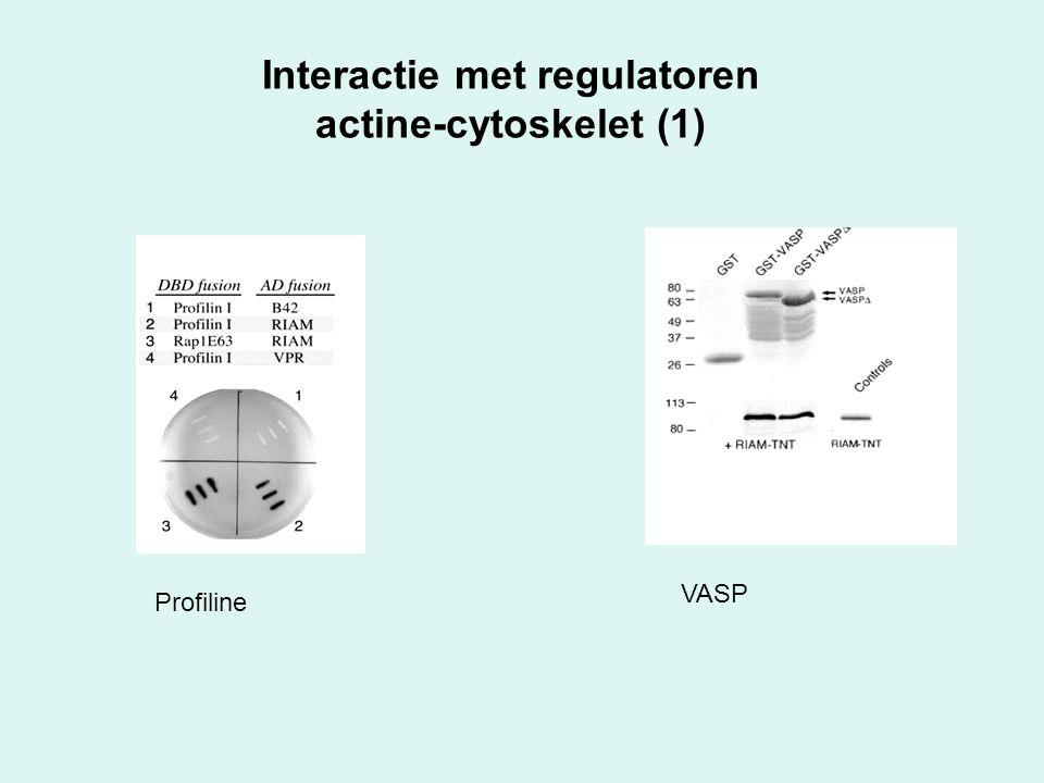 Interactie met regulatoren actine-cytoskelet (1) Profiline VASP