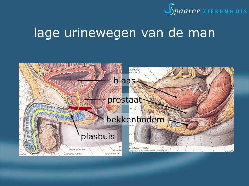 lage urinewegen van de man blaas prostaat plasbuis bekkenbodem