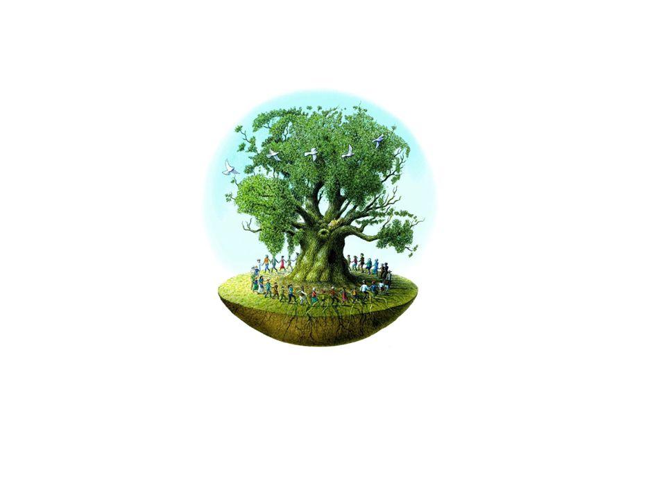 Wereldboomdraaiboek Welke stappen worden doorlopen bij de realisatie van een wereldboom?