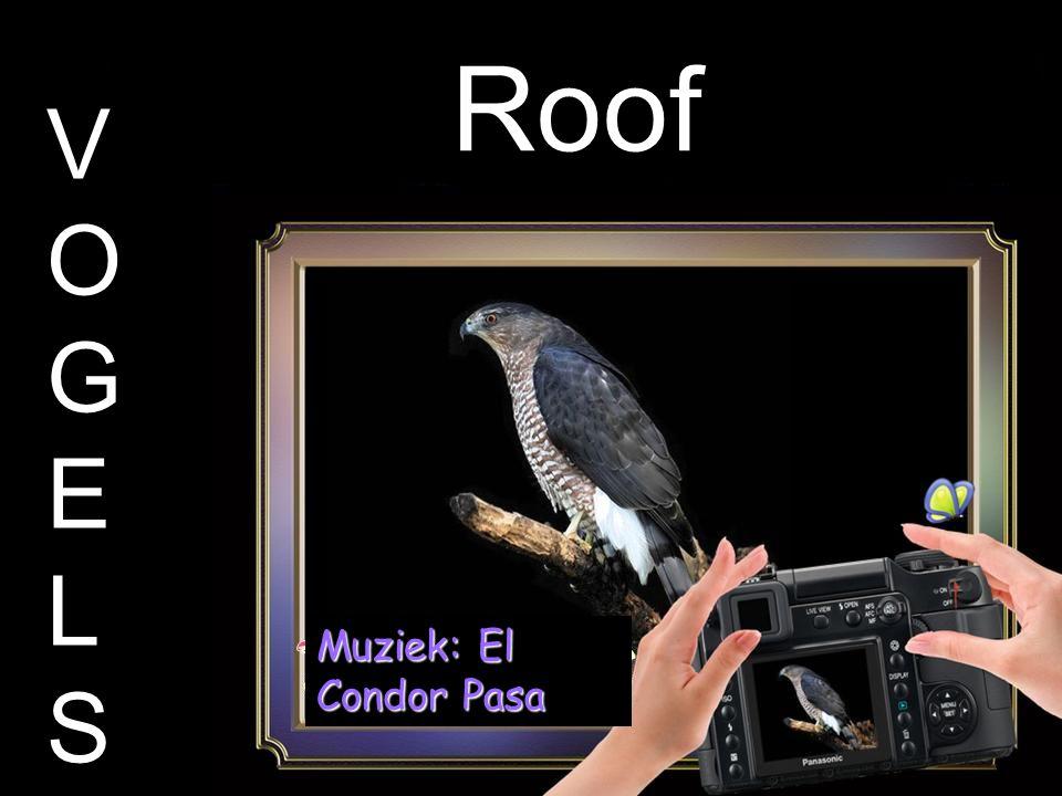 Roof VOGELSVOGELS Muziek: El Condor Pasa
