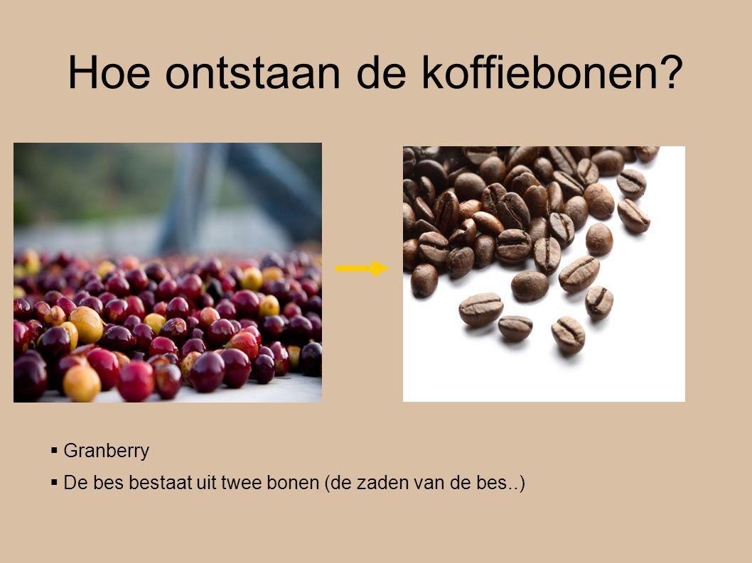 Hoe ontstaan de koffiebonen?  Granberry  De bes bestaat uit twee bonen (de zaden van de bes..)