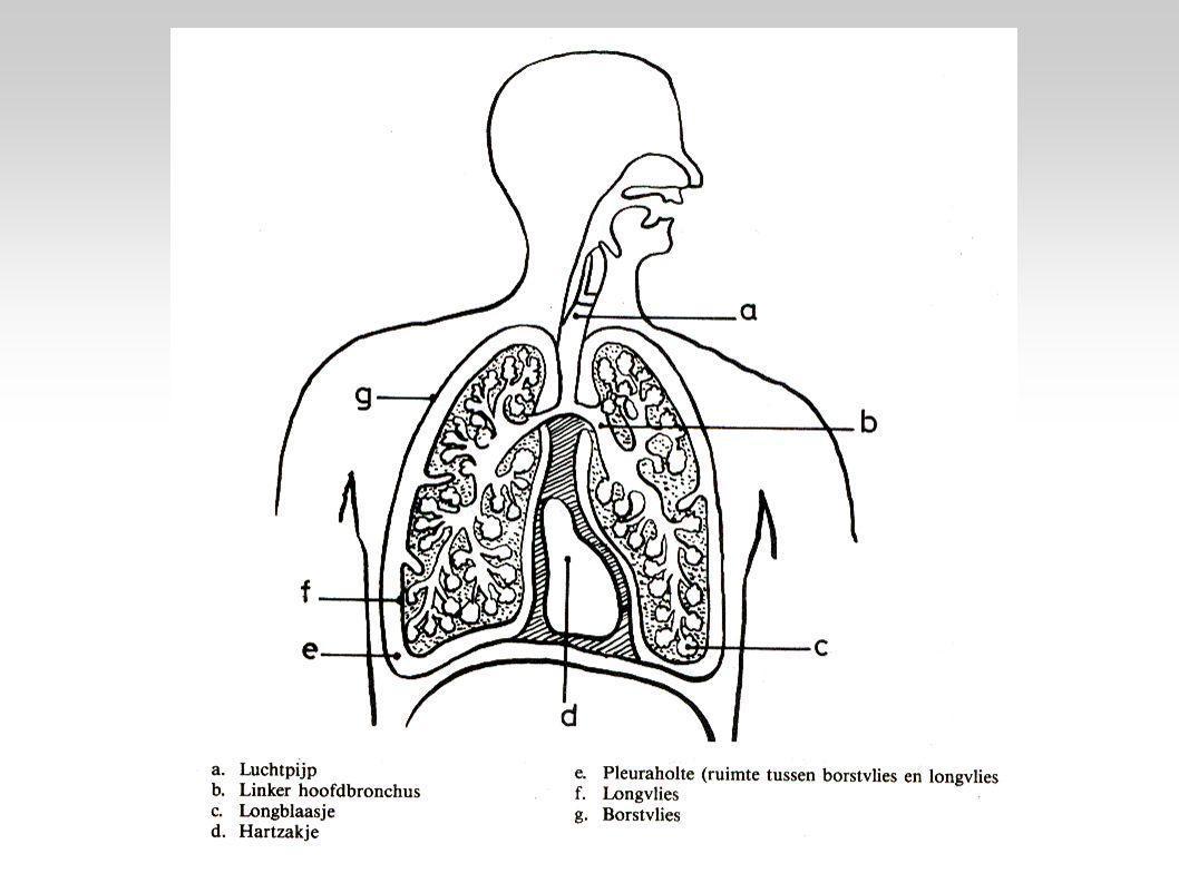 Vragen Wie hebben meer last van astma.Jongens of meisjes.