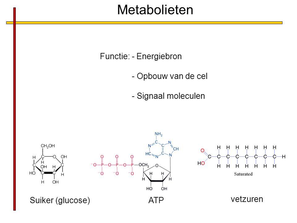 Suiker (glucose)ATP vetzuren Metabolieten Functie: - Energiebron - Opbouw van de cel - Signaal moleculen