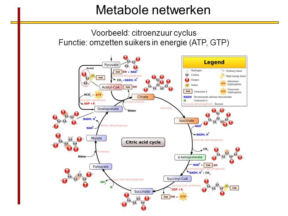 Metabole netwerken Voorbeeld: citroenzuur cyclus Functie: omzetten suikers in energie (ATP, GTP)