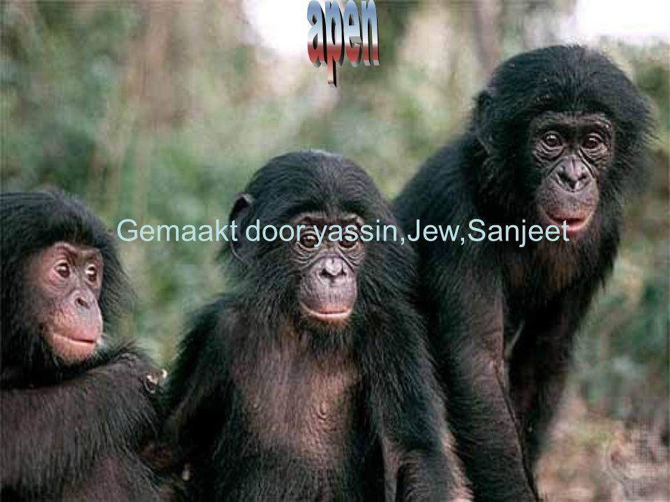 Kenmerken van Ze zijn bruin Ze hebben een staart Ze eten bladeren,vruchten,insecten,bananen,somi- Ge vlees Ze wegen (gorilla) tot max 200 kg.35 gram ze wonen in Zuid- en Midden-Amerika, Afrika, Madagaskar, Zuid- en Oost-Azië l