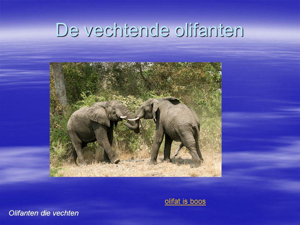 De vechtende olifanten Olifanten die vechten olifat is boos