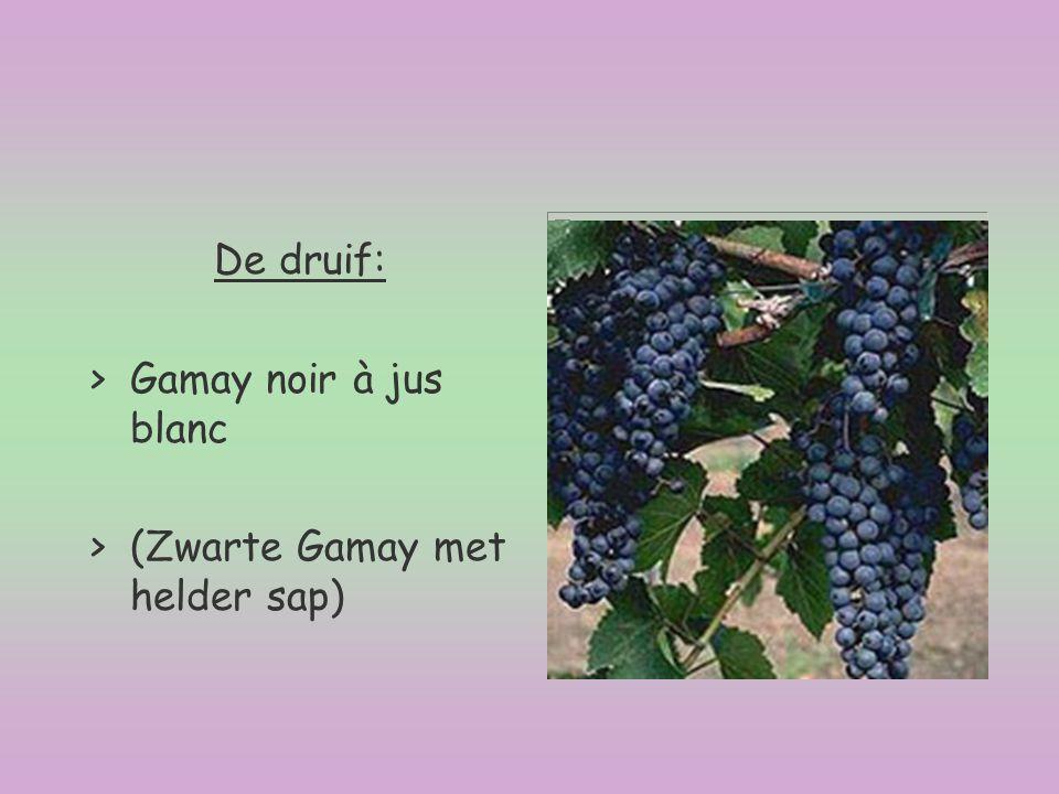 De druif: >Gamay noir à jus blanc >(Zwarte Gamay met helder sap)