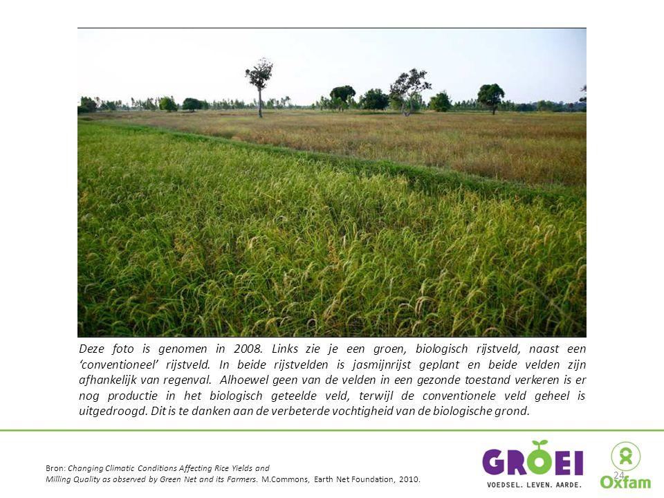 Deze foto is genomen in 2008. Links zie je een groen, biologisch rijstveld, naast een 'conventioneel' rijstveld. In beide rijstvelden is jasmijnrijst