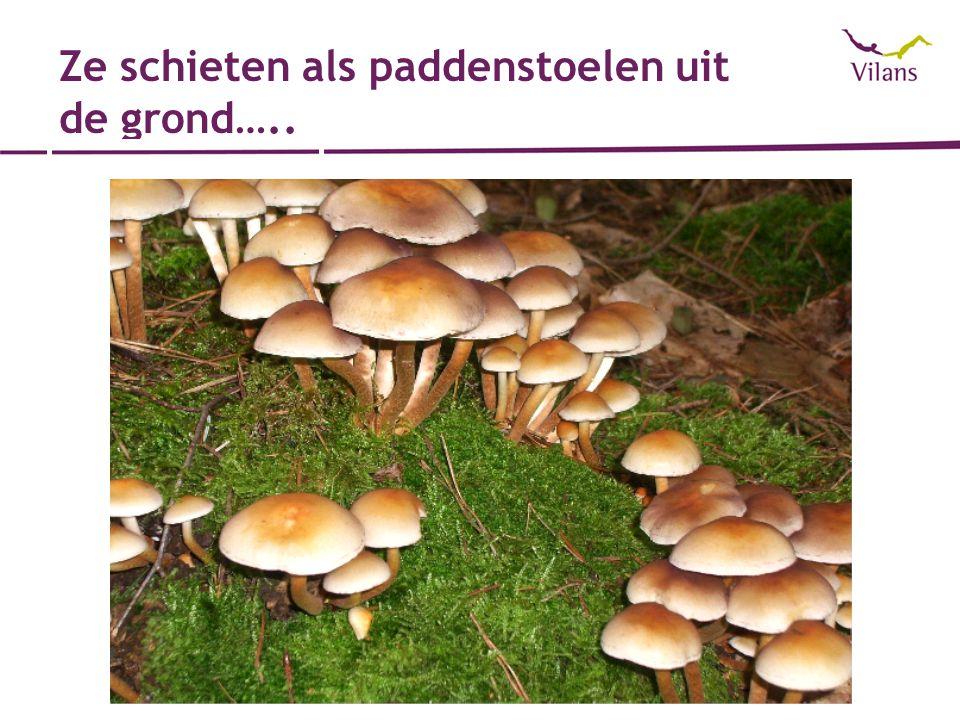 Ze schieten als paddenstoelen uit de grond…..