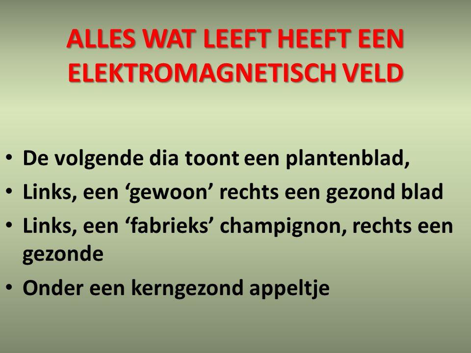 ALLES WAT LEEFT HEEFT EEN ELEKTROMAGNETISCH VELD De volgende dia toont een plantenblad, Links, een 'gewoon' rechts een gezond blad Links, een 'fabriek