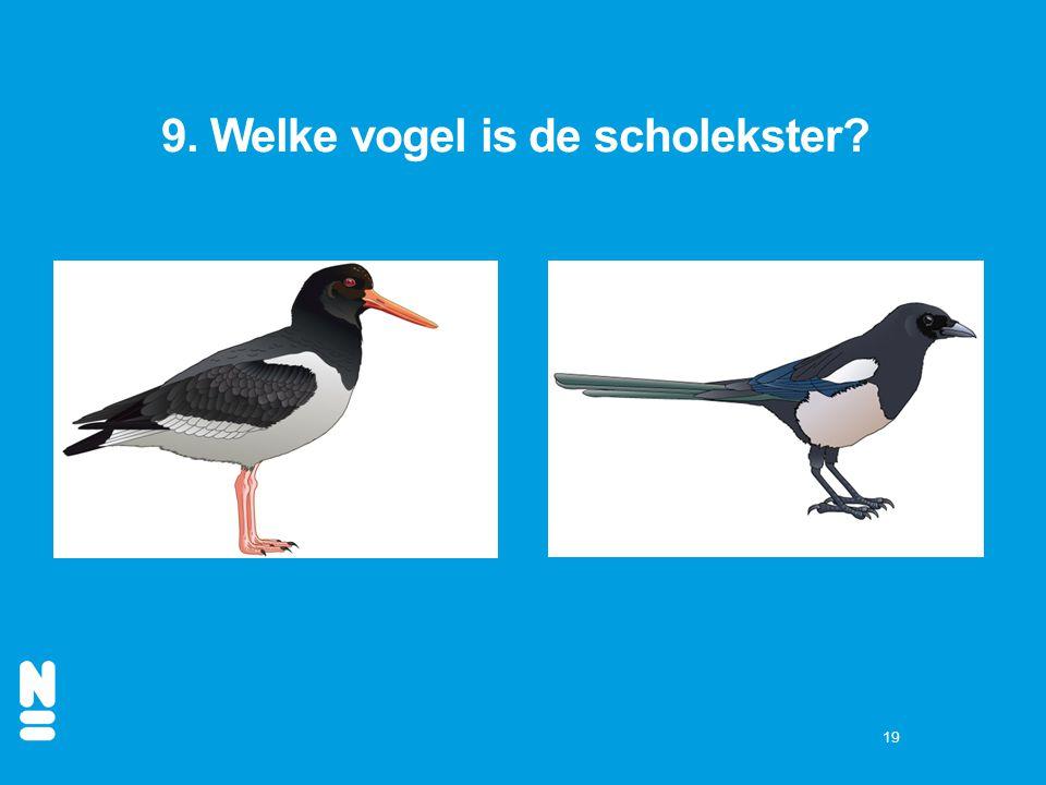 19 9. Welke vogel is de scholekster?