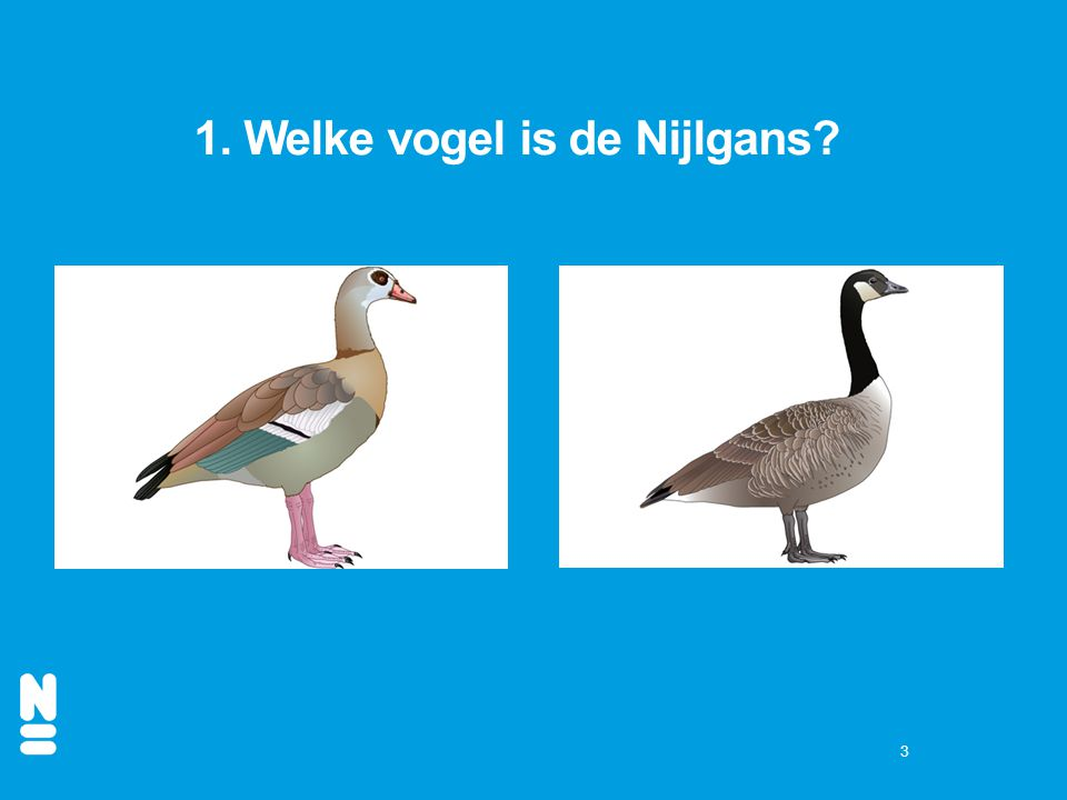 3 1. Welke vogel is de Nijlgans?