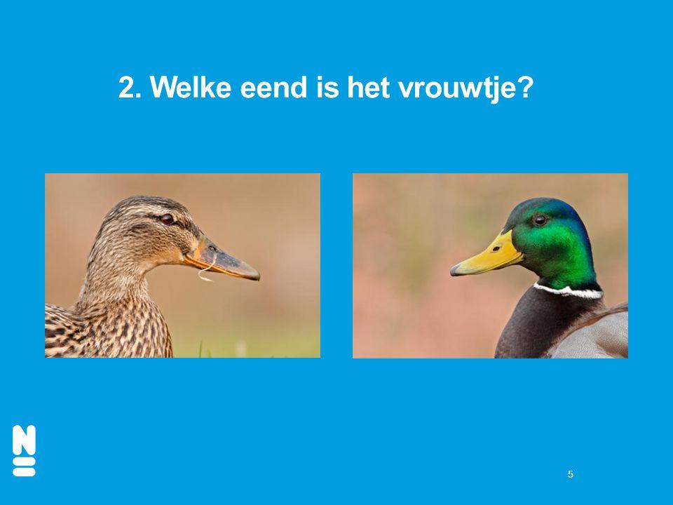 5 2. Welke eend is het vrouwtje?