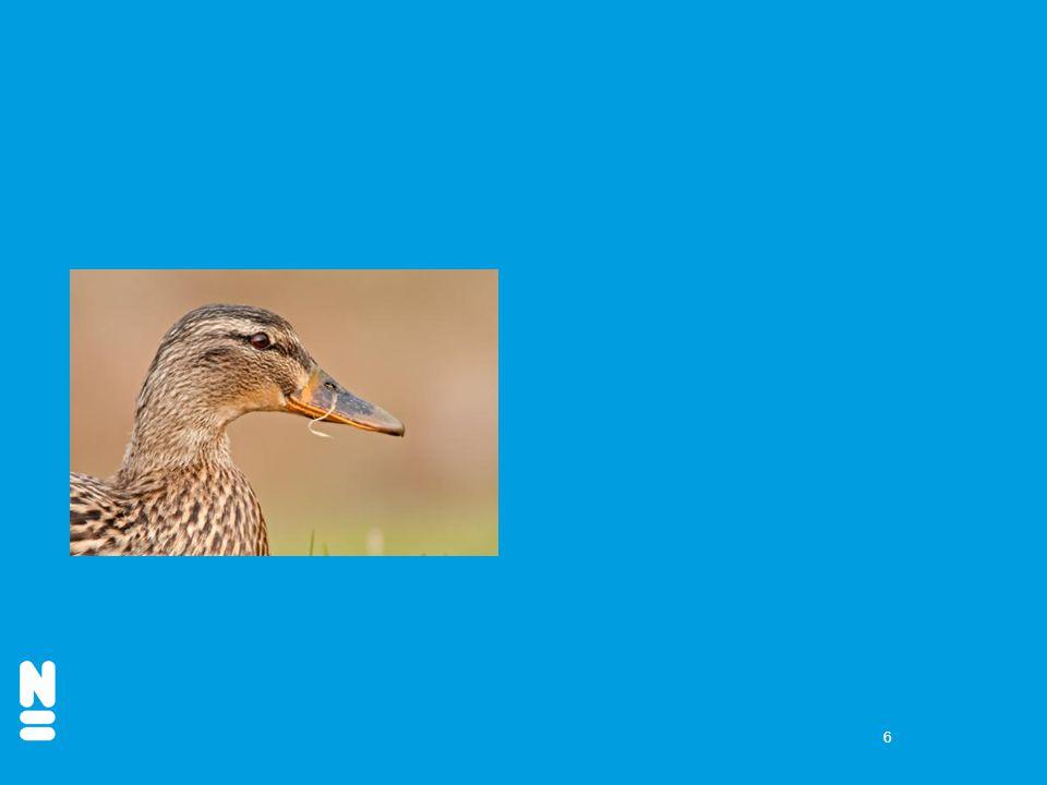 7 3. Welke vogel is de meerkoet?