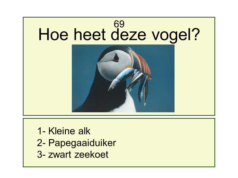 1- Kleine alk 2- Papegaaiduiker 3- zwart zeekoet 69 Hoe heet deze vogel?
