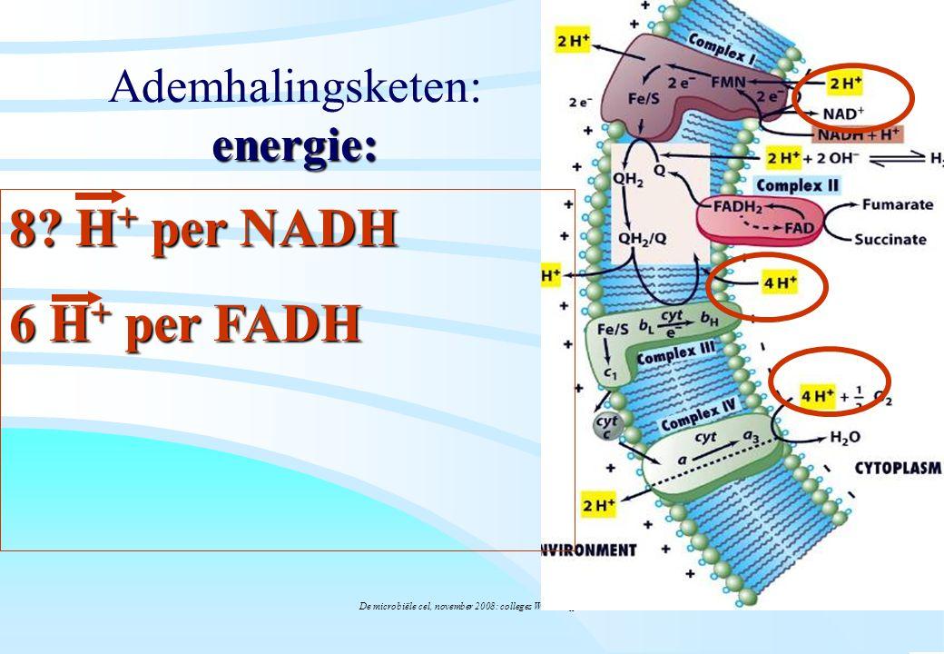 De microbiële cel, november 2008: colleges Westerhoff energie: Ademhalingsketen: energie: 8? H + per NADH 6 H + per FADH