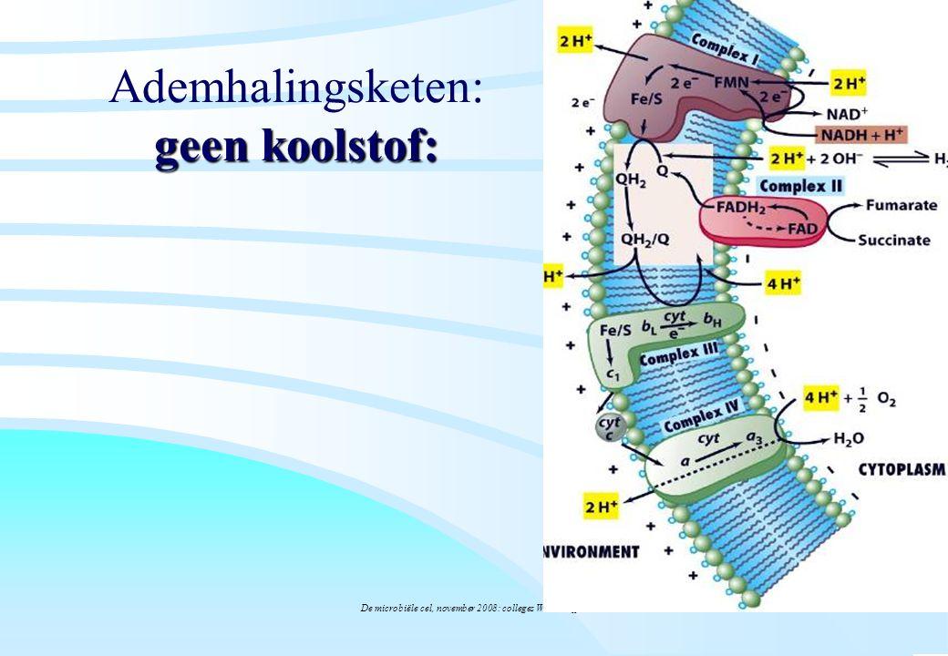 De microbiële cel, november 2008: colleges Westerhoff geen koolstof: Ademhalingsketen: geen koolstof: