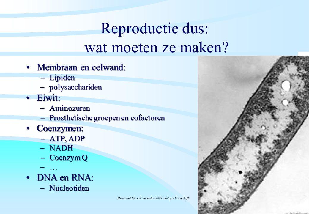 De microbiële cel, november 2008: colleges Westerhoff Reproductie dus: wat moeten ze maken? Membraan en celwand:Membraan en celwand: –Lipiden –polysac