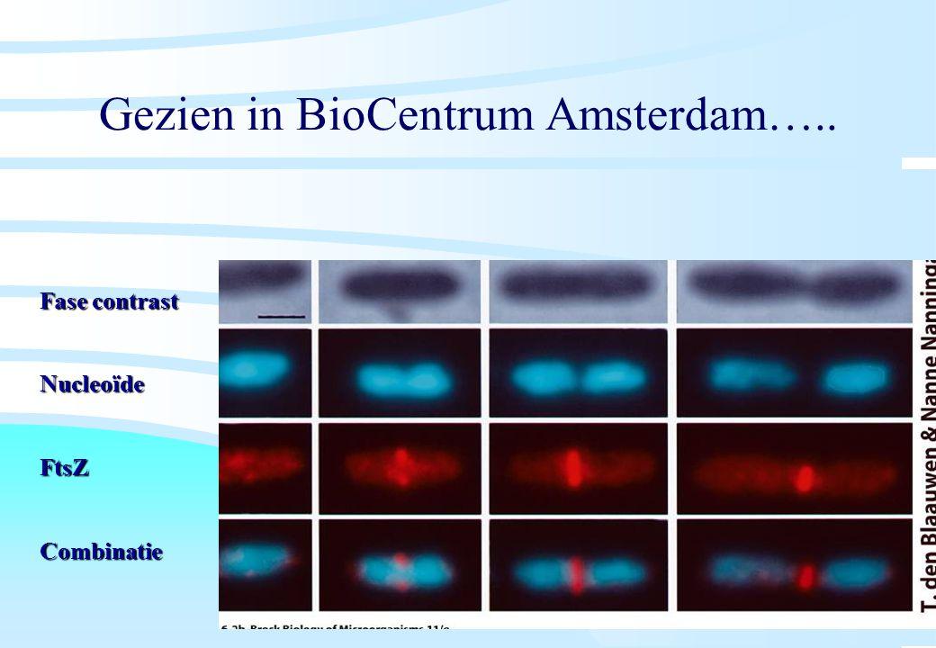 Gezien in BioCentrum Amsterdam….. Fase contrast Nucleoïde FtsZCombinatie