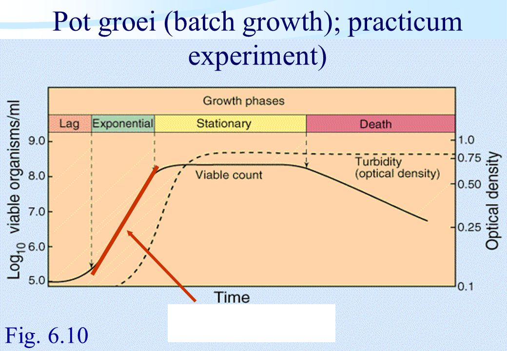 De microbiële cel, november 2008: colleges Westerhoff Pot groei (batch growth); practicum experiment) Fig. 6.10