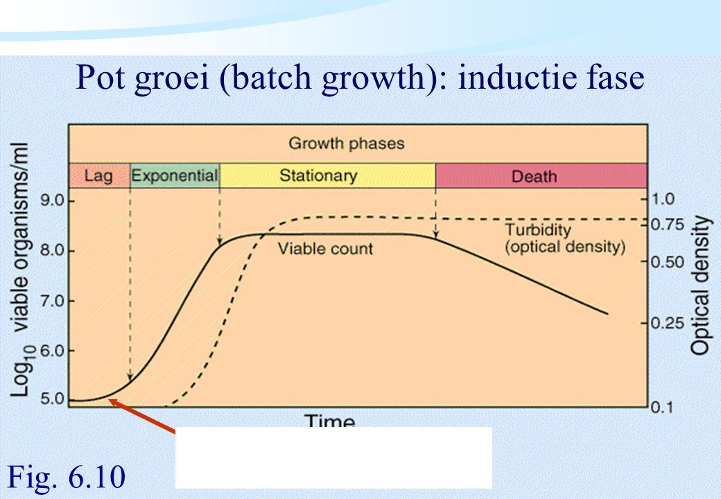De microbiële cel, november 2008: colleges Westerhoff Pot groei (batch growth): inductie fase Fig. 6.10