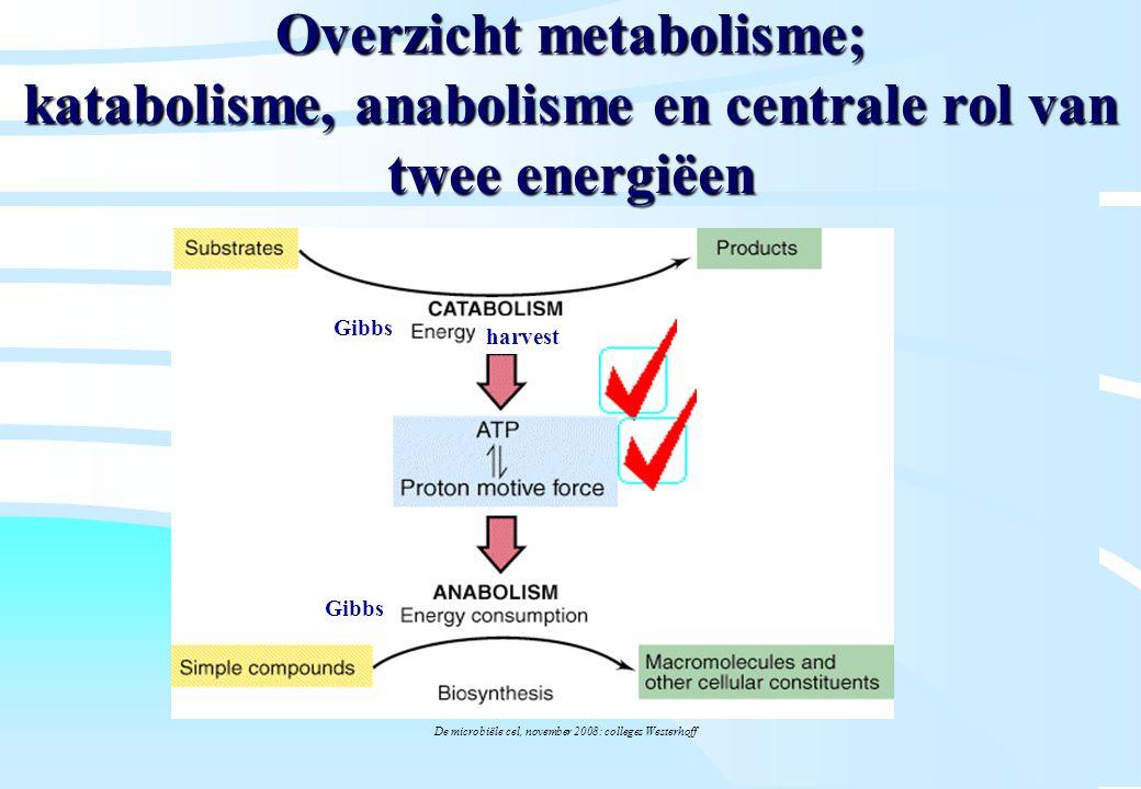 De microbiële cel, november 2008: colleges Westerhoff Overzicht metabolisme; katabolisme, anabolisme en centrale rol van twee energiëen Gibbs harvest