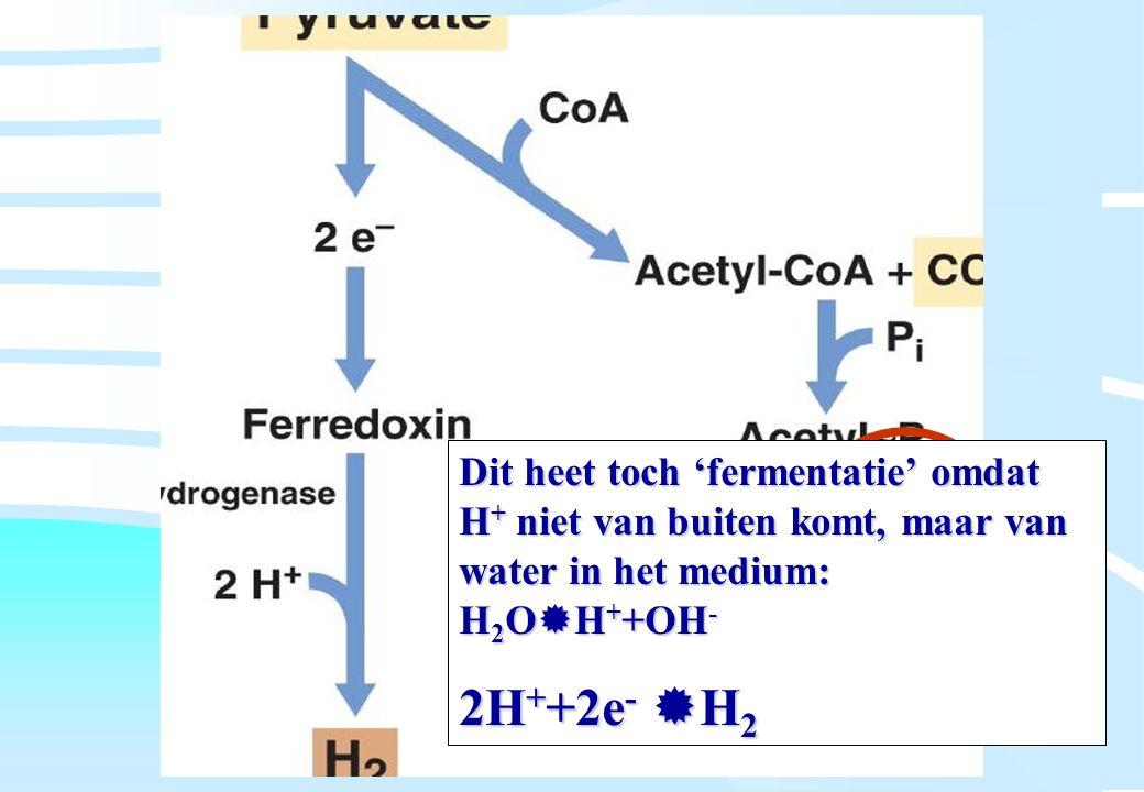 De microbiële cel, november 2008: colleges Westerhoff Dit heet toch 'fermentatie' omdat H + niet van buiten komt, maar van water in het medium: H 2 O