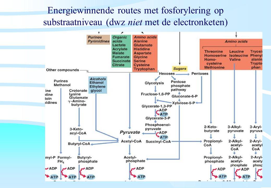 De microbiële cel, november 2008: colleges Westerhoff Energiewinnende routes met fosforylering op substraatniveau (dwz niet met de electronketen)