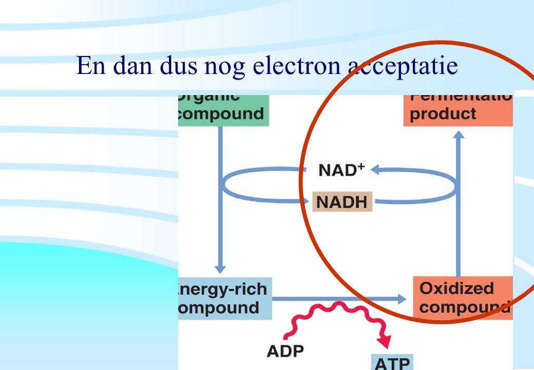 De microbiële cel, november 2008: colleges Westerhoff En dan dus nog electron acceptatie