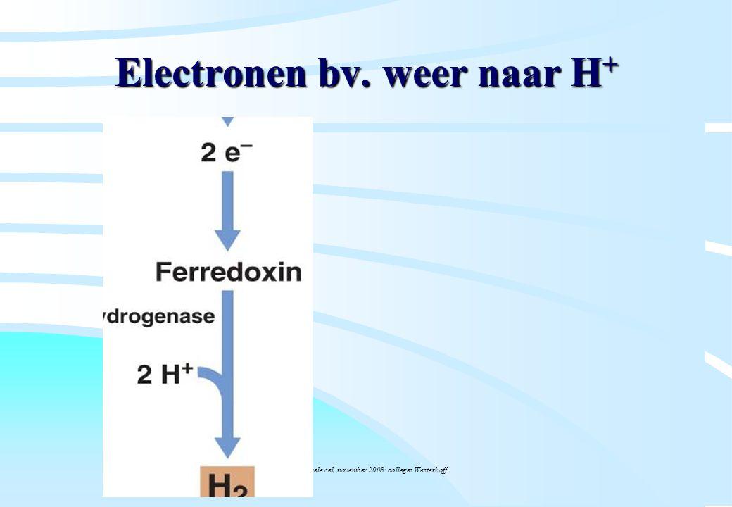 De microbiële cel, november 2008: colleges Westerhoff Electronen bv. weer naar H +