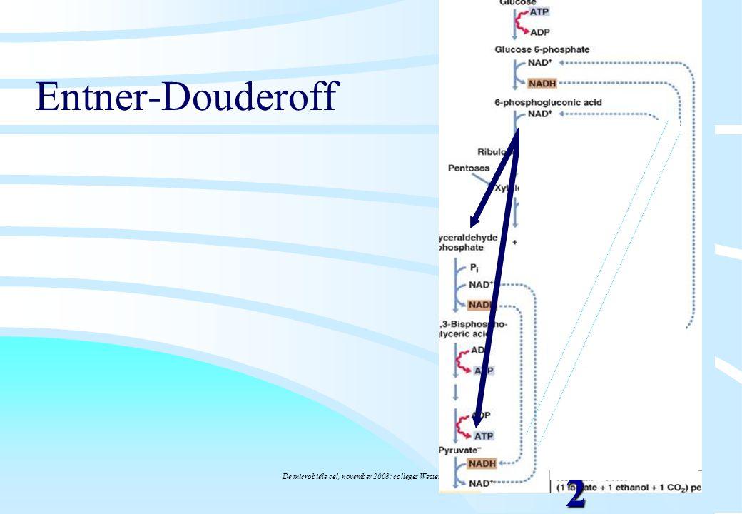 De microbiële cel, november 2008: colleges Westerhoff Entner-Douderoff 2