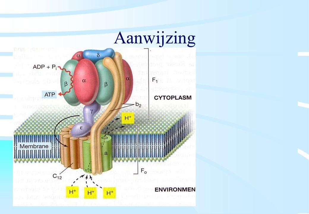 De microbiële cel, november 2008: colleges Westerhoff Aanwijzing