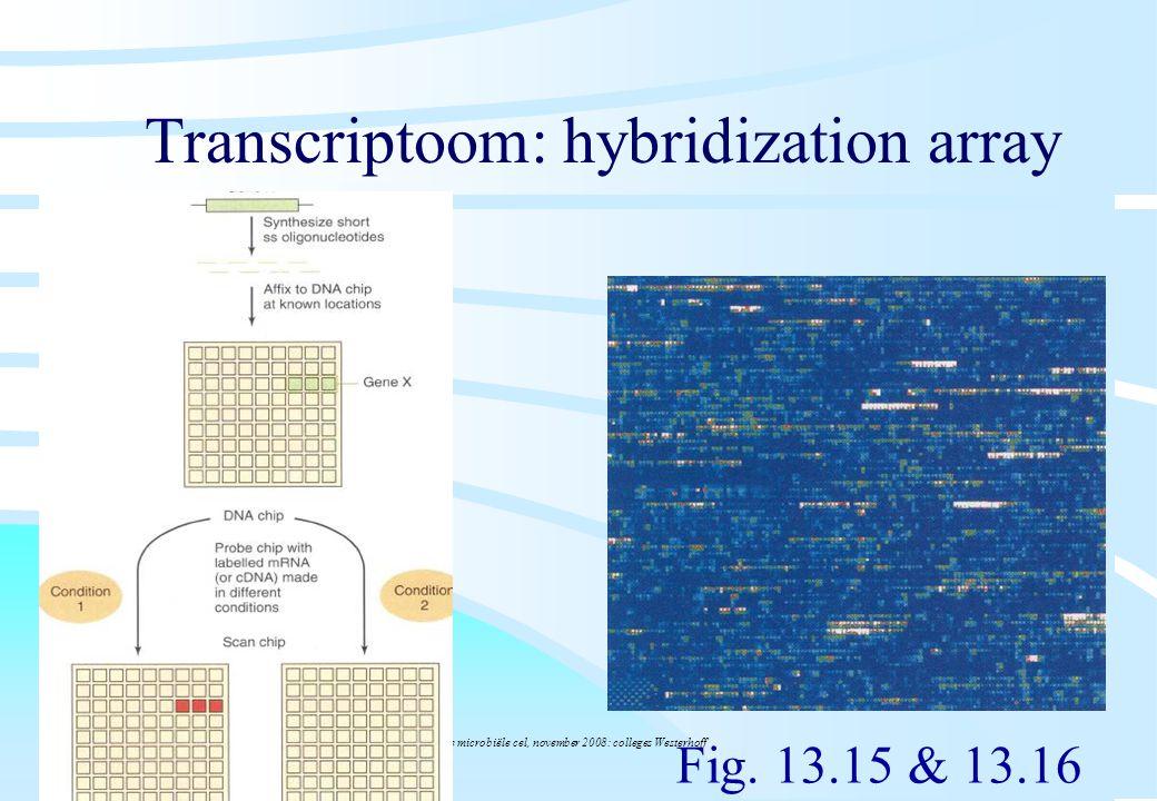 De microbiële cel, november 2008: colleges Westerhoff Transcriptoom: hybridization array Fig. 13.15 & 13.16