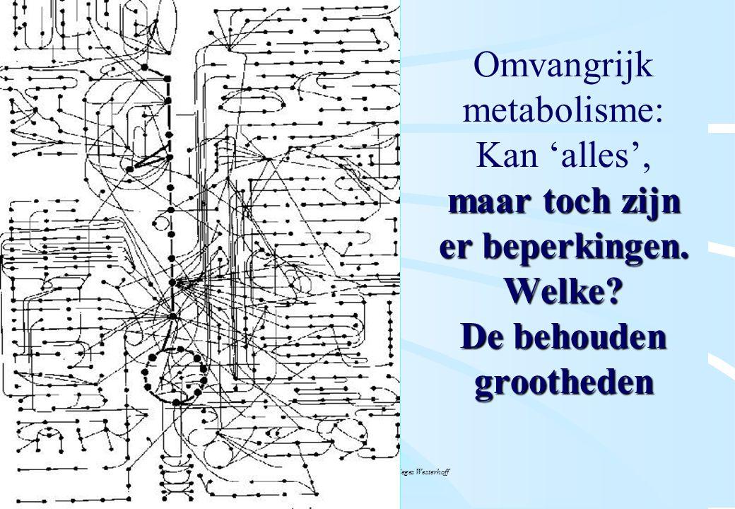 De microbiële cel, november 2008: colleges Westerhoff maar toch zijn er beperkingen. Welke? De behouden grootheden Omvangrijk metabolisme: Kan 'alles'