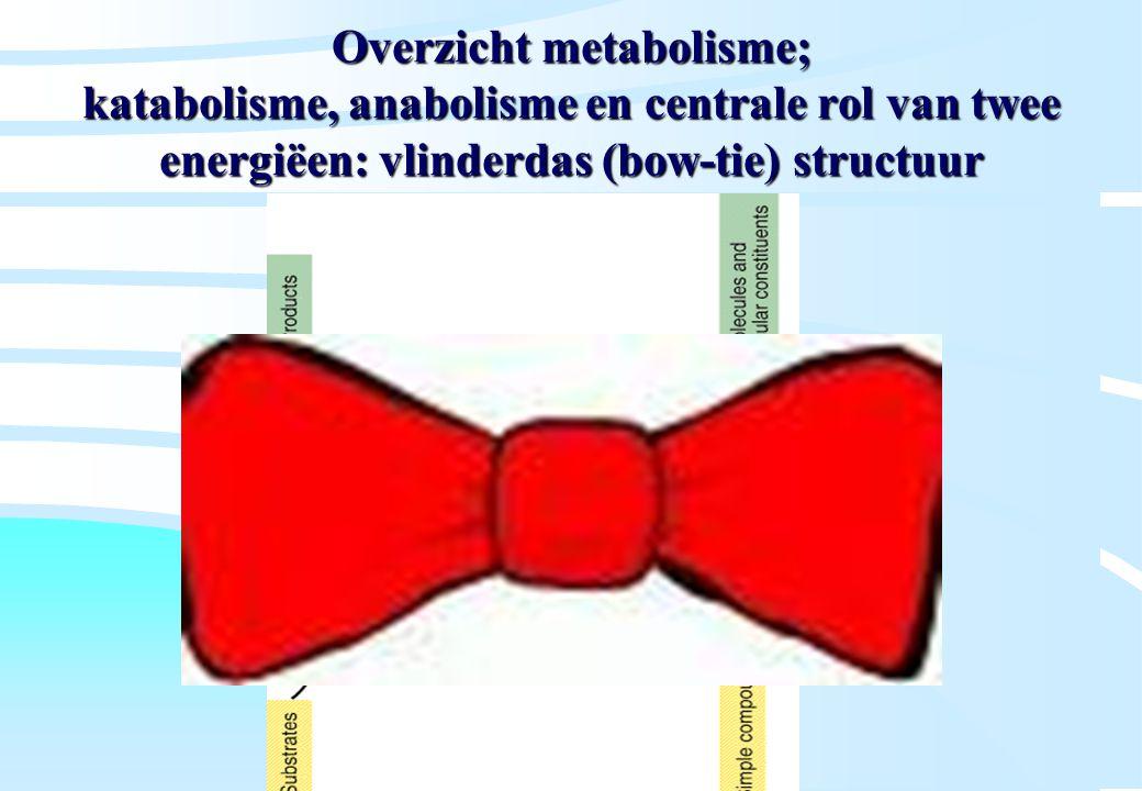 De microbiële cel, november 2008: colleges Westerhoff Overzicht metabolisme; katabolisme, anabolisme en centrale rol van twee energiëen: vlinderdas (b